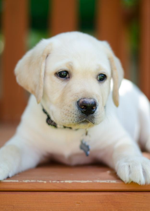 PuppyBrother-11