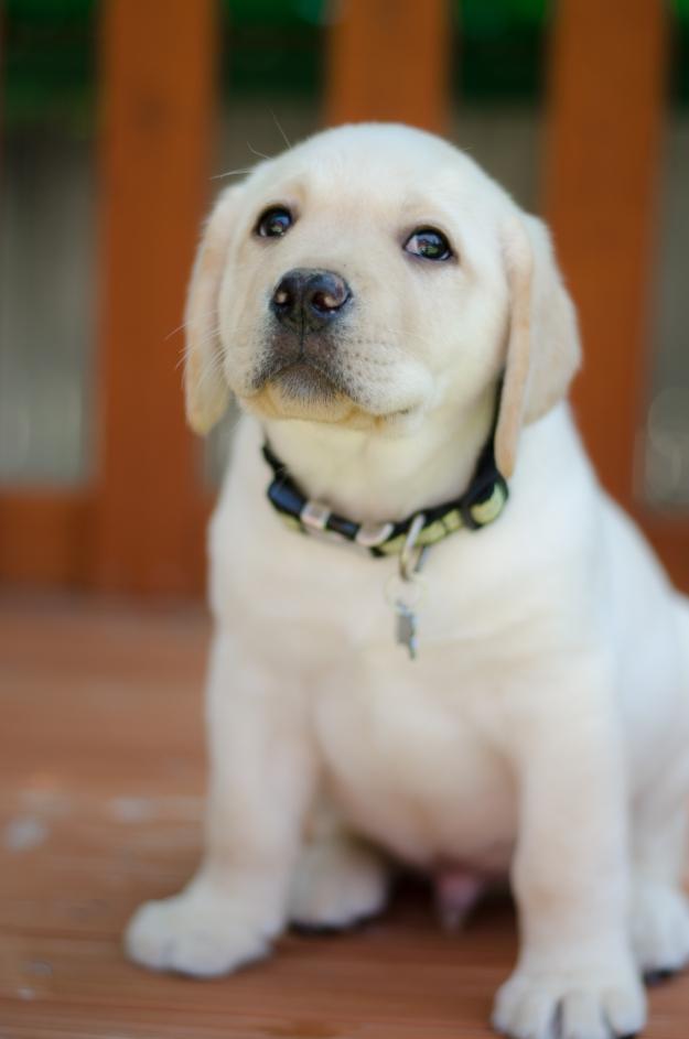 PuppyBrother-31