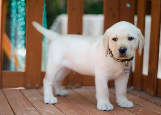 PuppyBrother-44